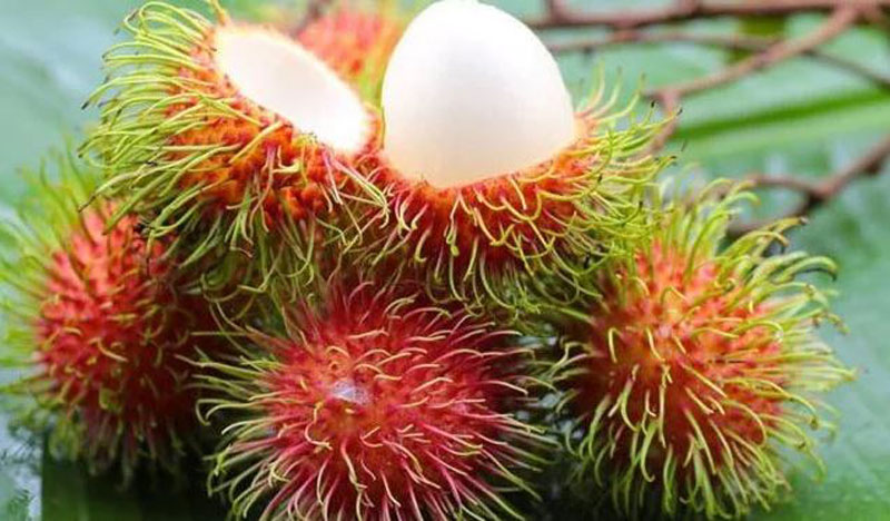 Rambutan fruit as a superfruit to add to diet