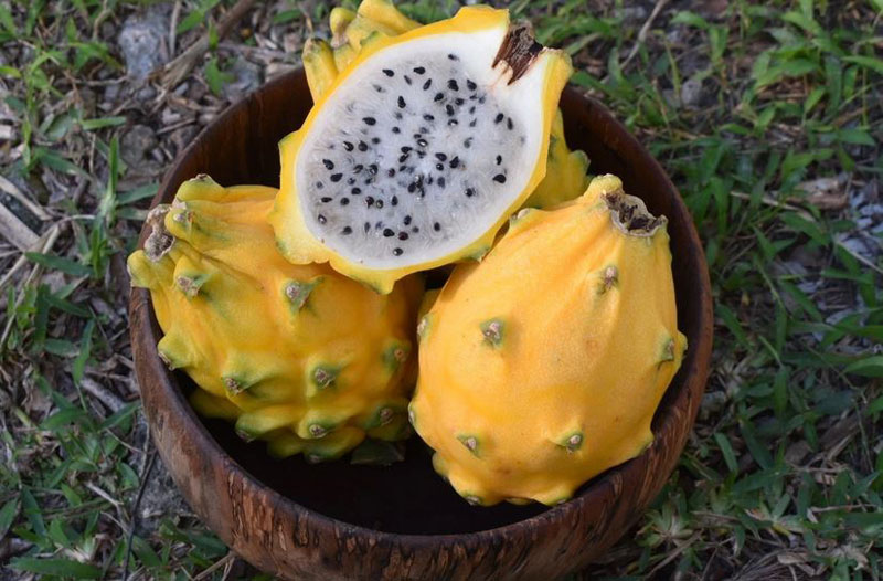 Yellow dragon fruit facts and benefits